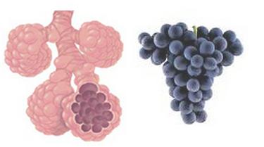 ענבים והריאות
