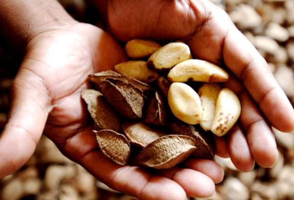 אגוזי ברזיל עשירים בסלניום