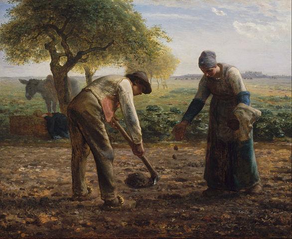 שותלים תפוח אדמה
