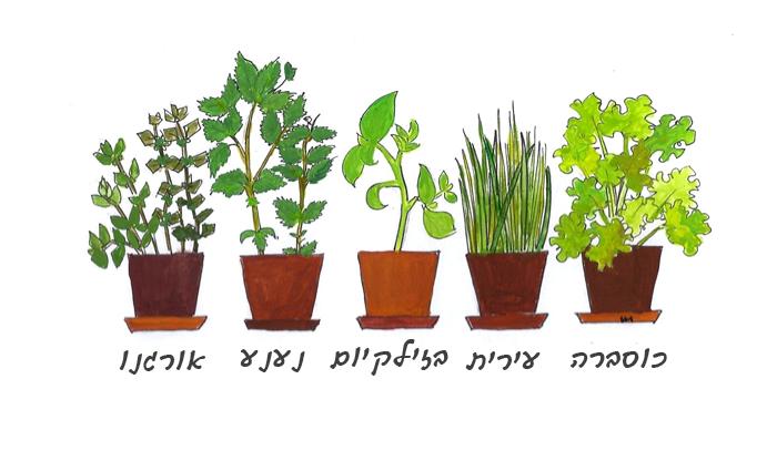 צמחים לגידול בבית